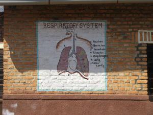 sm Respiratory System